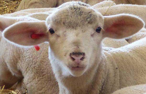 Die Bio Schafskäserei